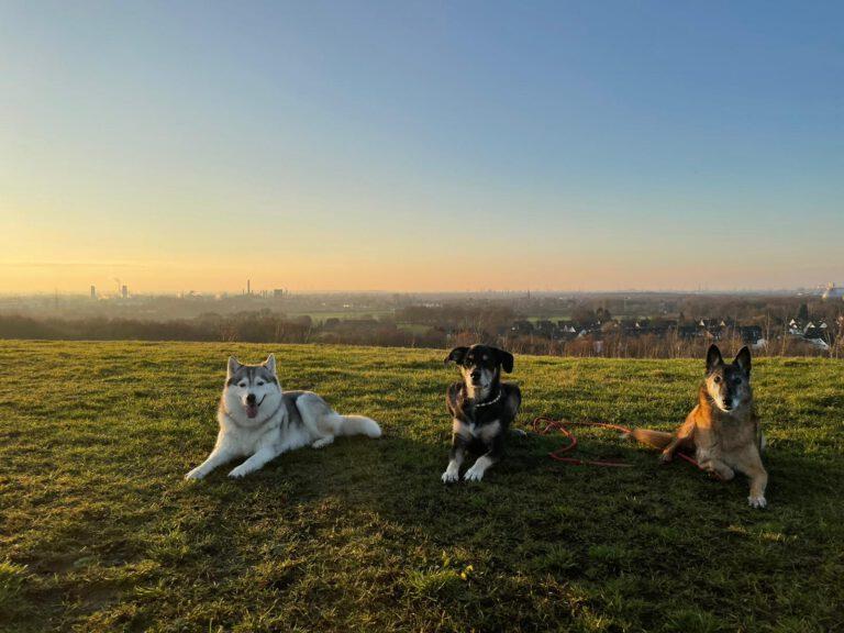 Die drei Hunde der Hundeschule Body Talk