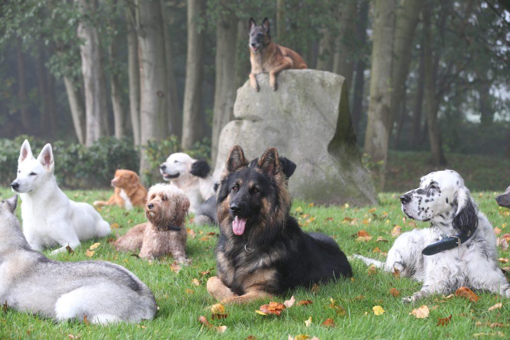 Hunde aus dem Body Talk Club liegen zusammen auf der Wiese