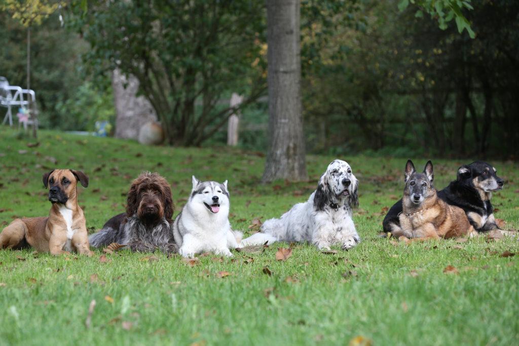 Hunde im Kurs der Hundeschule Body Talk auf der Wiese