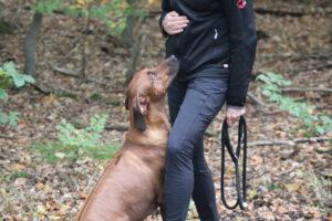 """Hundetrainerin Julia von der Hundeschule Body Talk mit einem Hund bei der Übung """"Vorsitzen"""""""