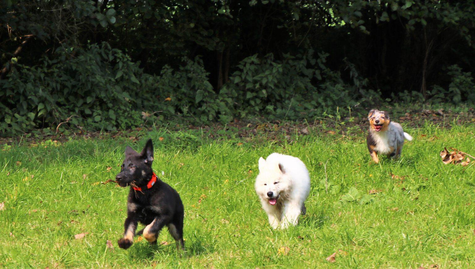 Welpen beim Spiel im Welpenkurs der Hundeschule Body Talk