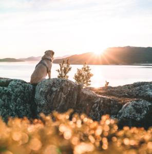 Hund mit Geschirr auf einer Wanderung